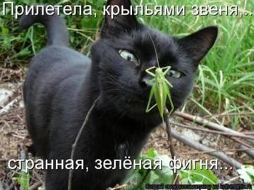 http://s9.uplds.ru/t/qARST.jpg