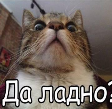 http://s9.uplds.ru/t/xTiEC.jpg