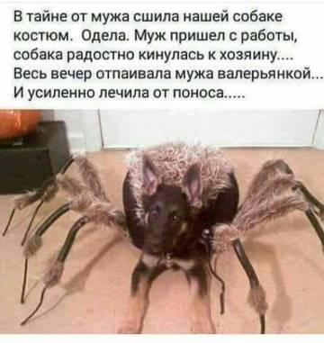 http://s9.uplds.ru/t/yju0c.jpg